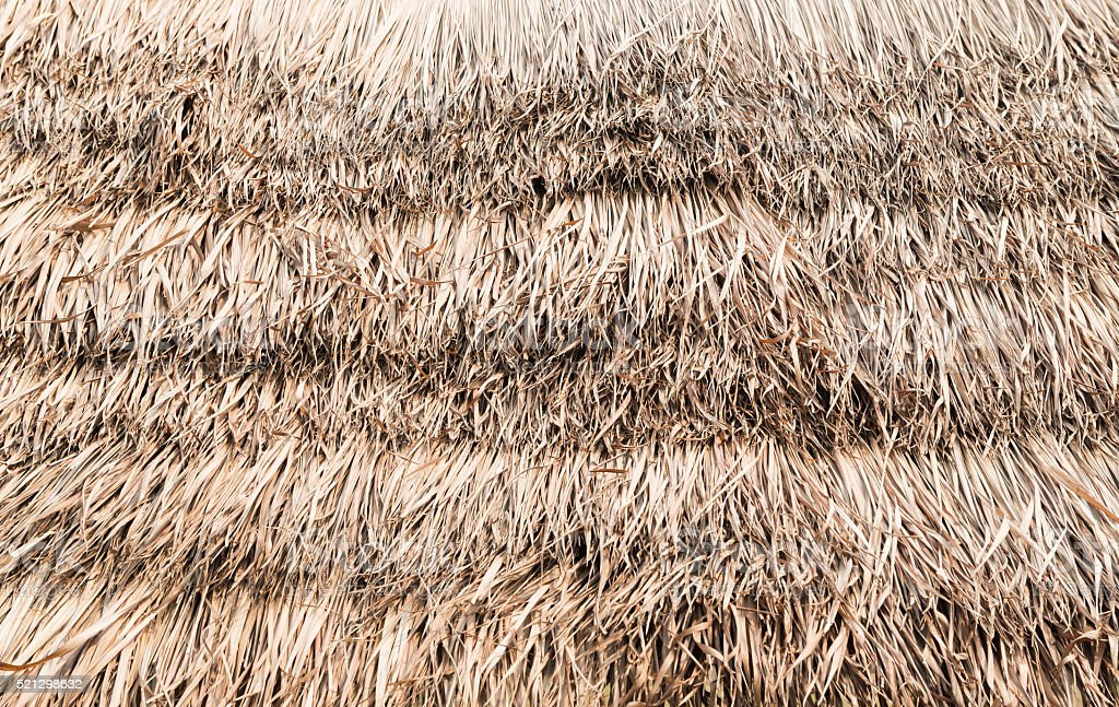 thatch roof background stock photo