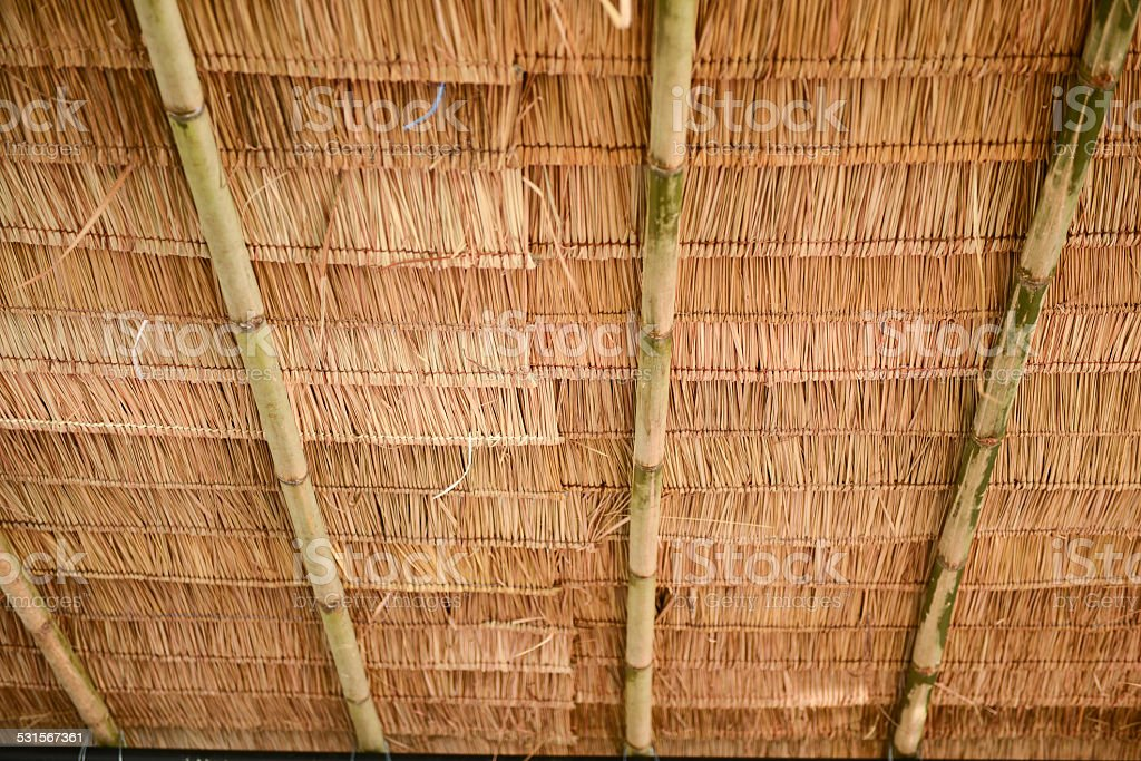 thatch roof stock photo