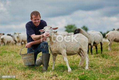 Shot of a cheerful young farmer walking with a herd of sheep and feeding them while holding a bucket