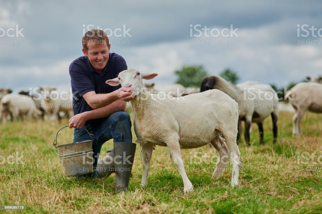 That's a good sheep stock photo