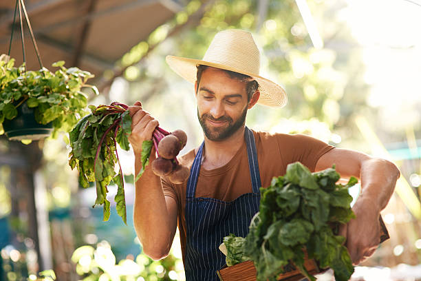 That's one beautiful looking beet stock photo