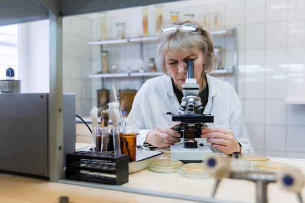 la donna seriose attraente di 50 anni, scienziata, che lavora con il microscopio e la cultura batterica nel laboratorio di microbiologia del college - campione scientifico foto e immagini stock