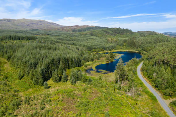 The aerial view from a drone of a small Scottish loch in a remote area of Dumfries and Galloway An aerial view of a small Scottish loch in an area of pine forest in south west Scotland. Beside the loch is a dirt road and in the background are hills with heather. johnfscott stock pictures, royalty-free photos & images