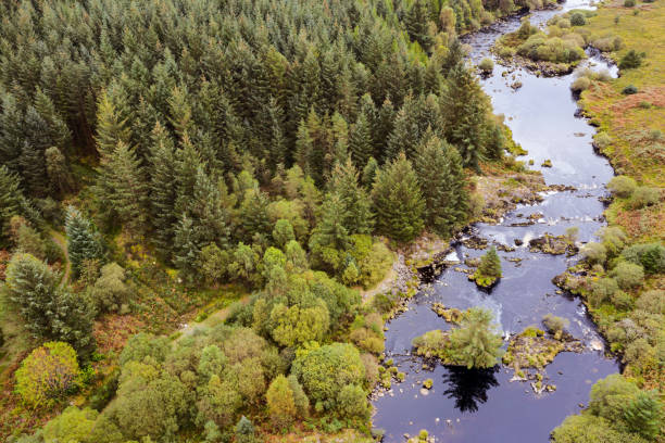 The aerial view of a river flowing next to a pine forest in rural Scotland The view from a drone of a slow moving river flowing through the countryside, the location is Dumfries and Galloway. Although it is still summer some of the fern has turned orange. johnfscott stock pictures, royalty-free photos & images