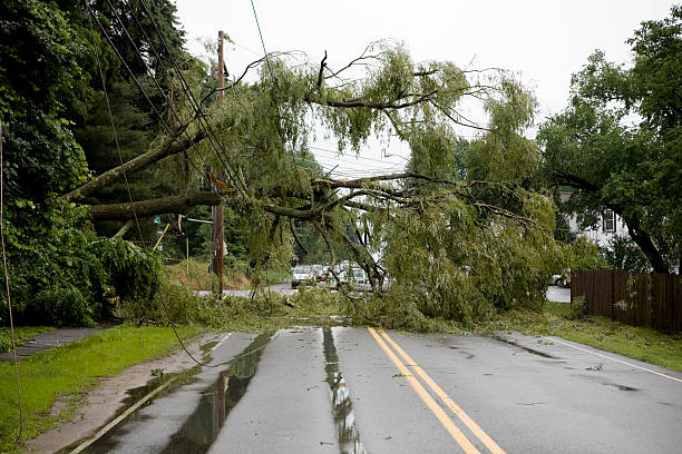 The aftermath of severe weather on a road Disaster aftermath of fallen tree on a power line, created after a severe wind and thunder storm. fallen tree stock pictures, royalty-free photos & images