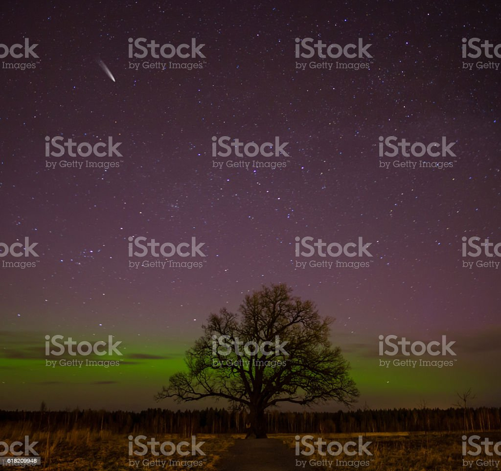 the age-old lone oak on a background of the Northern Lights stock photo