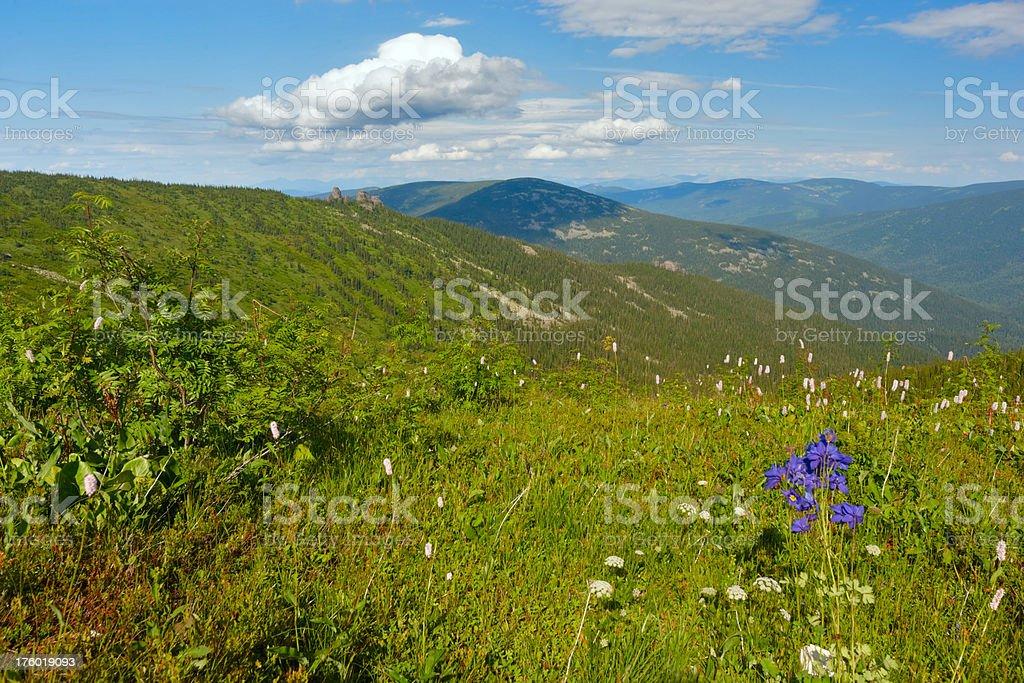 The Alpine meadows. Altay motives. stock photo