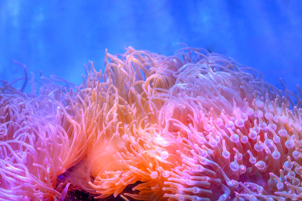 The amazing diversity of sea anemone The amazing diversity of sea anemone sea anemone stock pictures, royalty-free photos & images