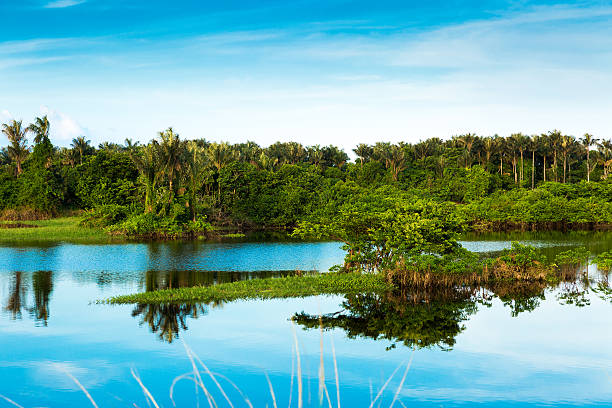 The Amazon Wetland in Brazil The Amazon Wetland in Brazil rio negro brazil stock pictures, royalty-free photos & images