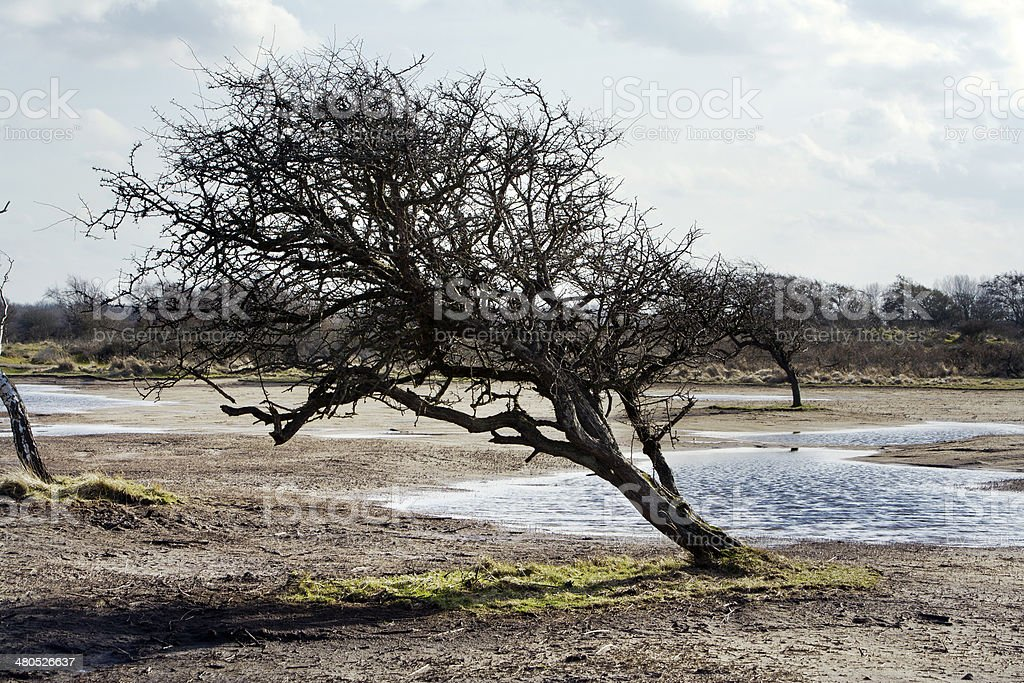 The Amsterdam Water Supply Dunes stock photo