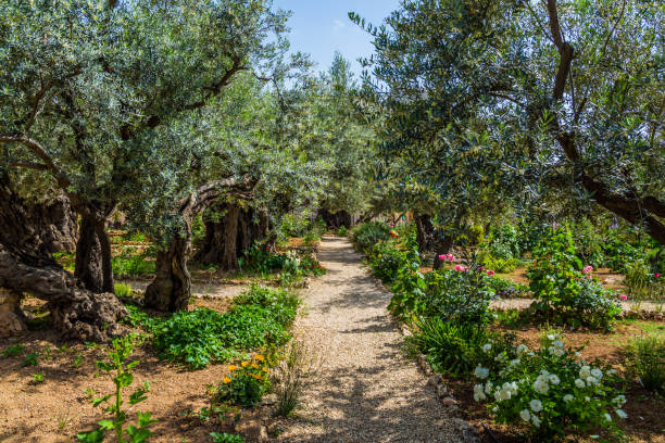 1 057 Garden Of Gethsemane Stock Photos Pictures Royalty Free Images Istock