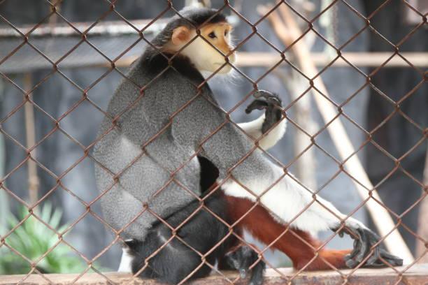 les animaux dans le safari de nuit - cage animal nuit photos et images de collection