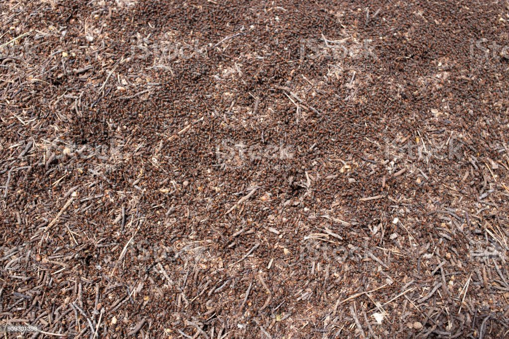 The ant colony stock photo