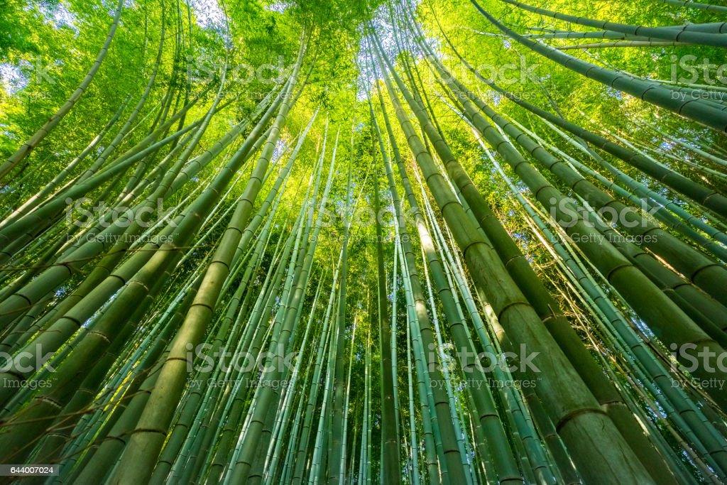 The Arashiyama Bamboo Grove in Kyoto, Japan - foto stock