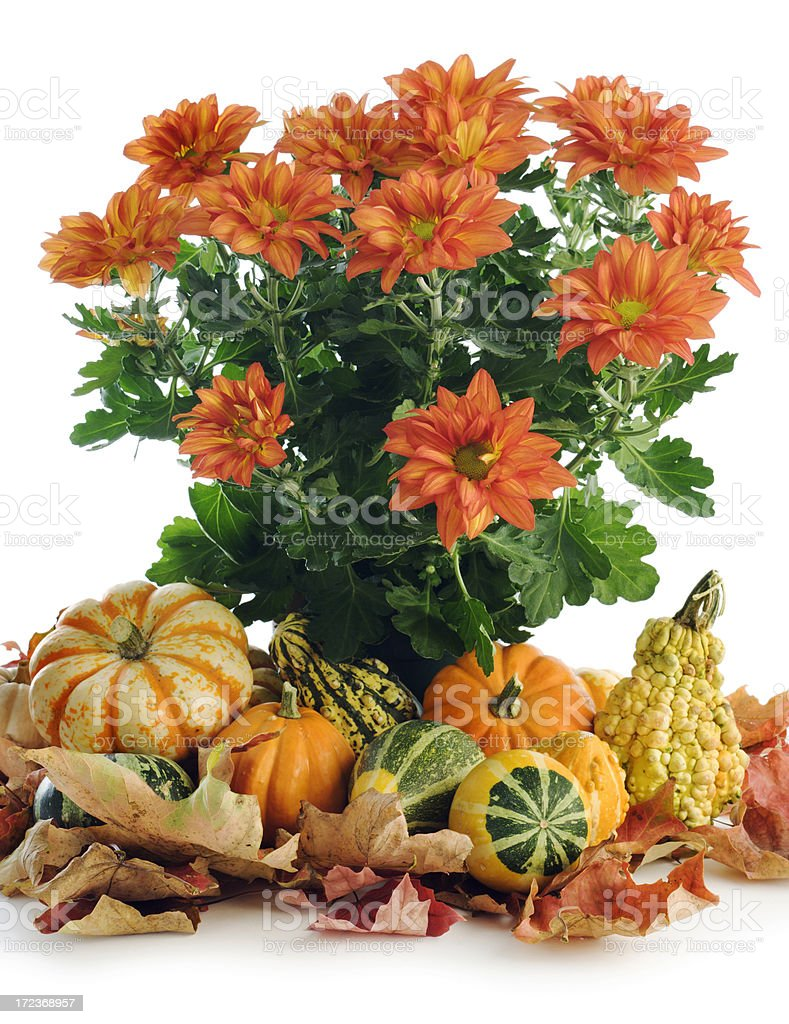 The Arrival of Autumn royalty-free stock photo