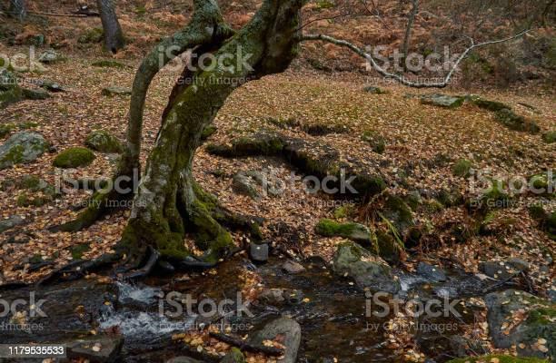 The arroyo del sestil del mallo descends in the autumn by the slope picture id1179535533?b=1&k=6&m=1179535533&s=612x612&h=dyqkvfyfy5y9e3aookm5cvfvo7iiayjjsvsjkcbgzsy=