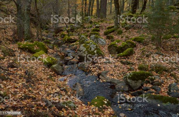 The arroyo del sestil del mallo descends in the autumn by the slope picture id1179535558?b=1&k=6&m=1179535558&s=612x612&h=yaqlaaeogycmatuddwttfmsni1amtksqaagb6o rkk0=