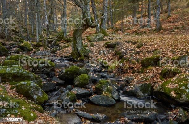 The arroyo del sestil del mallo descends in the autumn by the slope picture id1179535579?b=1&k=6&m=1179535579&s=612x612&h=9eog tri2hvzpgqjiyddodor6fyarw 0uaxhupvftlw=