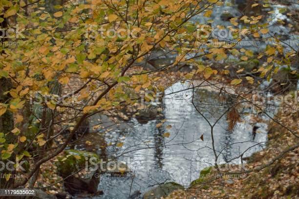 The arroyo del sestil del mallo descends in the autumn by the slope picture id1179535602?b=1&k=6&m=1179535602&s=612x612&h=ucklmttkbjs2ttv3iiuyjqiqobr8fedpn4ig1obtxfu=