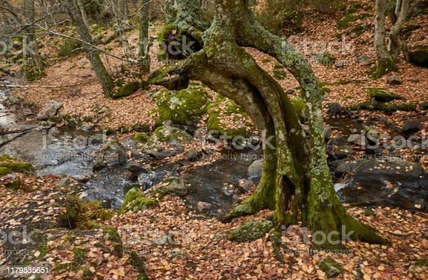 The arroyo del sestil del mallo descends in the autumn by the slope picture id1179535651?b=1&k=6&m=1179535651&s=612x612&h=norzd ocb5u5yfyuofo6exhsjoiju8dwmbwjkxjbi7i=
