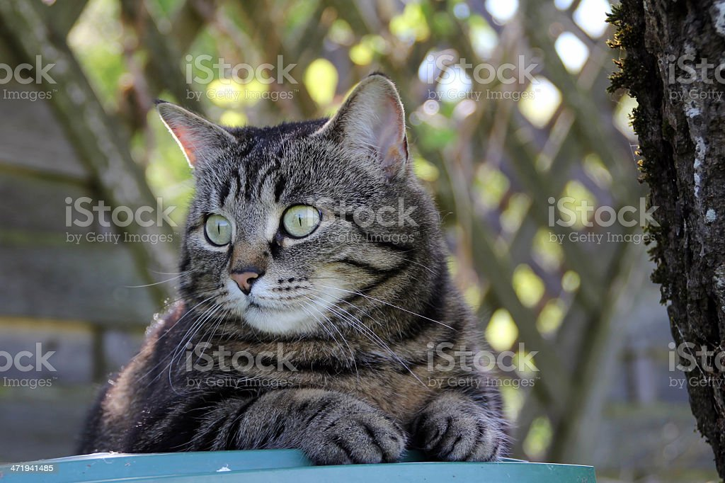 the attentive cat stock photo