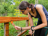The attractive 15-years-old teenager girl painting the fence at the backyard in the sunny summer day. Pennsylvania, Poconos region, USA