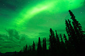 Northern lights in Anderdalen National Park at Senja Island, Norway