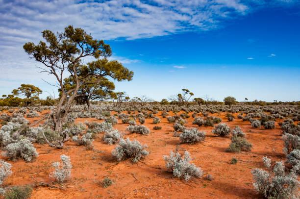 The Australian desert, the outback stock photo
