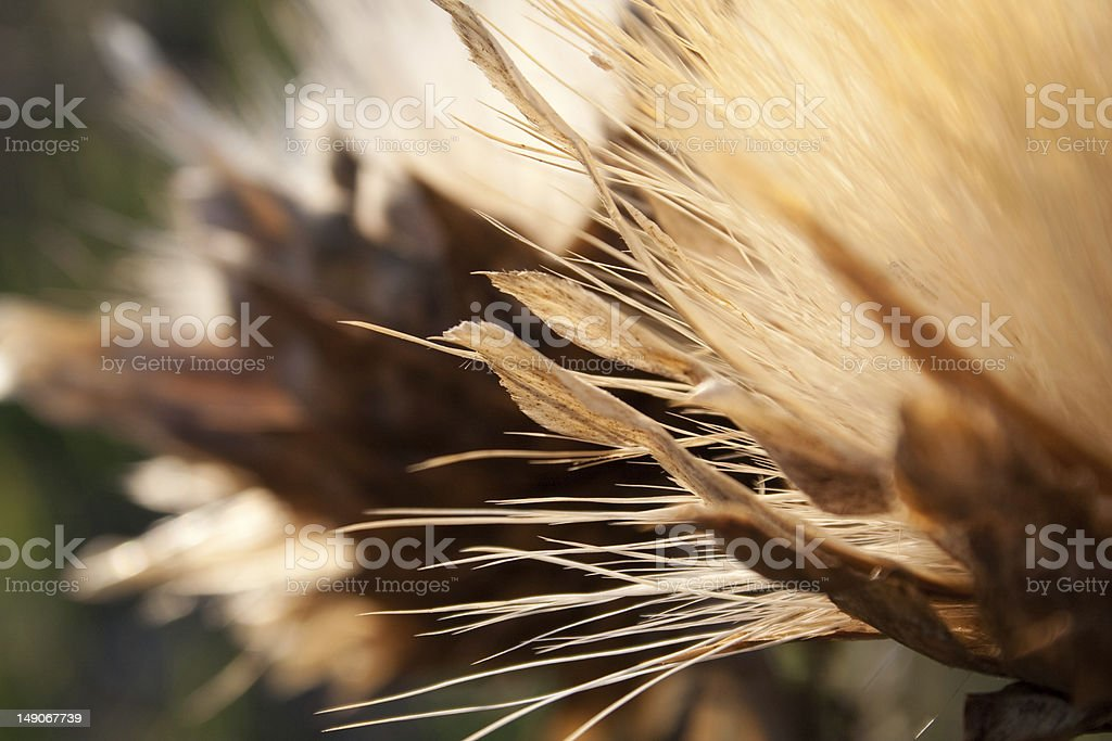 The Autumn Flowers stock photo