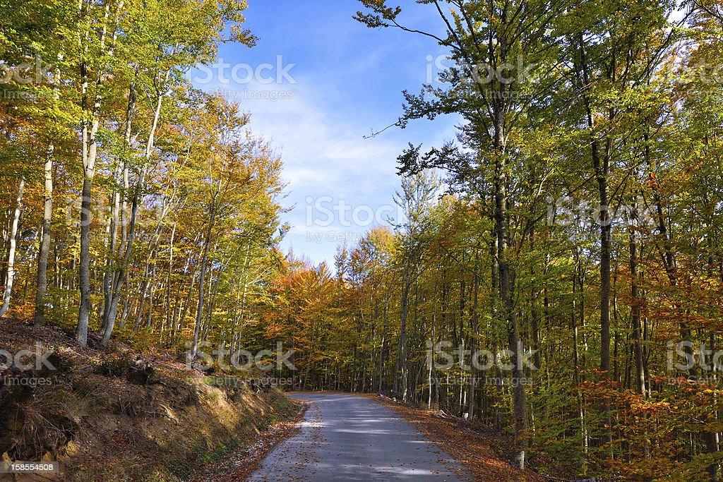 이 베스키드 (Beskid) 산의 가을 숲 royalty-free 스톡 사진