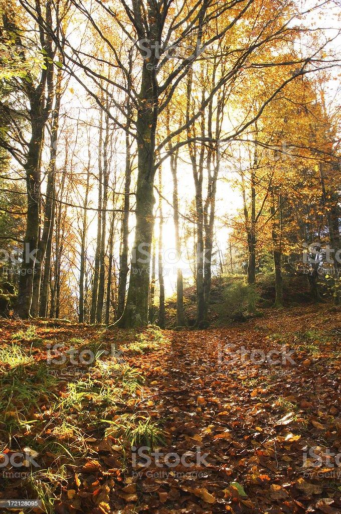 Der Herbst Wald – Foto