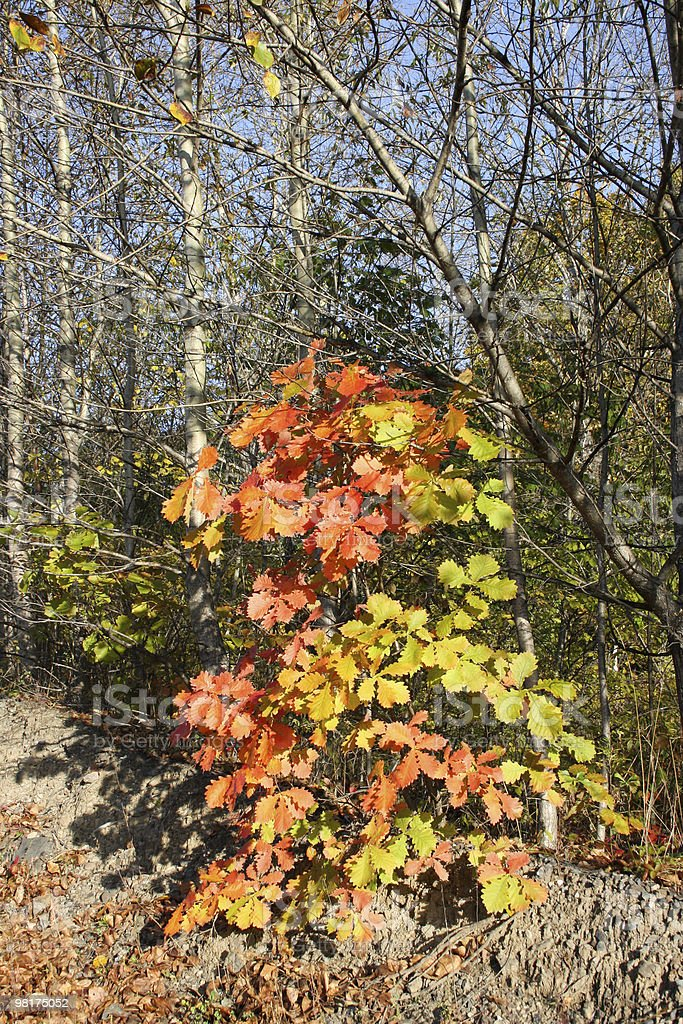 The autumn has come royalty-free stock photo