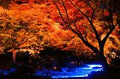 「秋の葉の特別なライトで東京 2015 年。