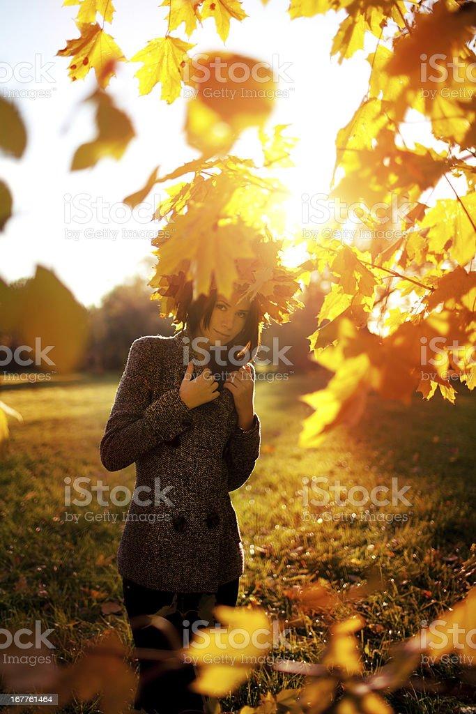 The Autumn royalty-free stock photo