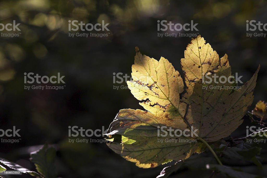 The autumn sheet stock photo