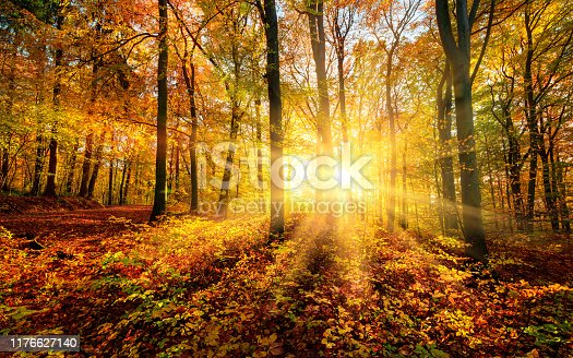 istock The autumn sun doing its magic in a forest 1176627140