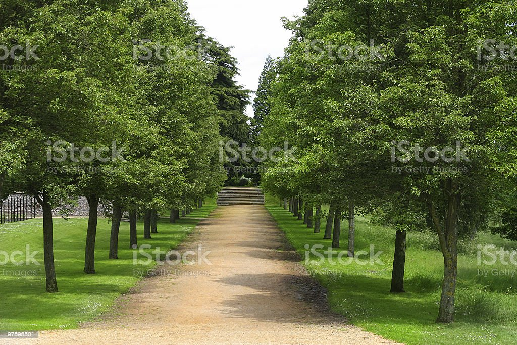 The avenue royalty-free stock photo