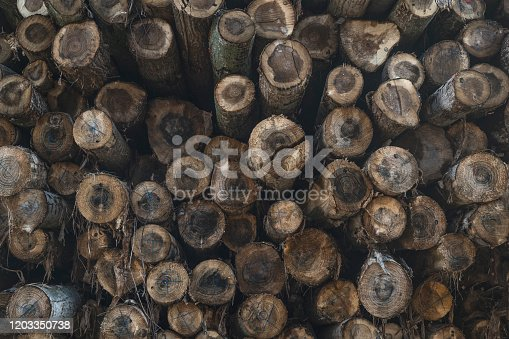 1139298729 istock photo The background of a lot of logs, overlapping, lined in a mess, waiting to be sorted in an outdoor factory 1203350738