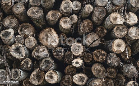 1139298729 istock photo The background of a lot of logs, overlapping, lined in a mess, waiting to be sorted in an outdoor factory 1203350752