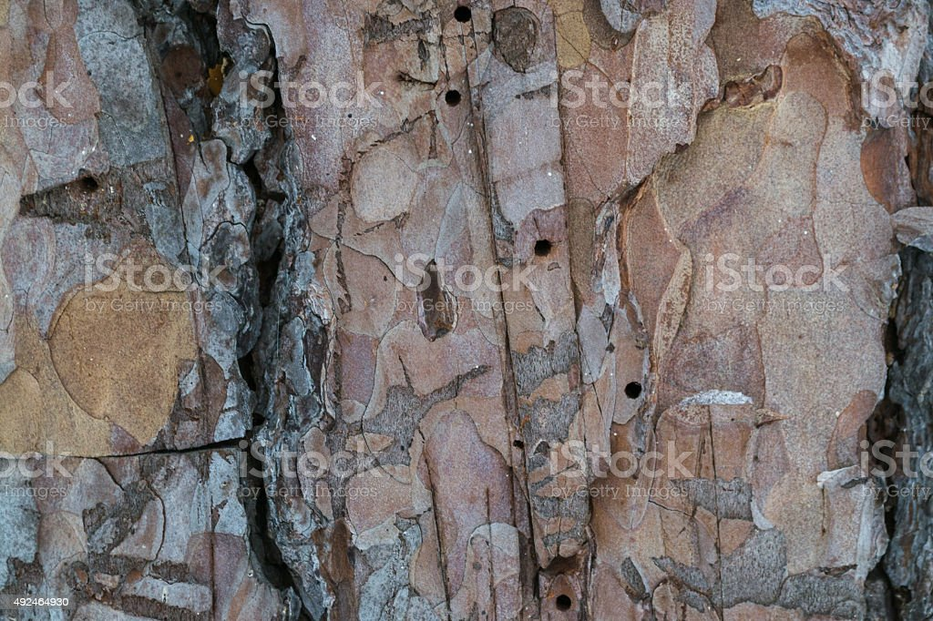 the background wood stock photo