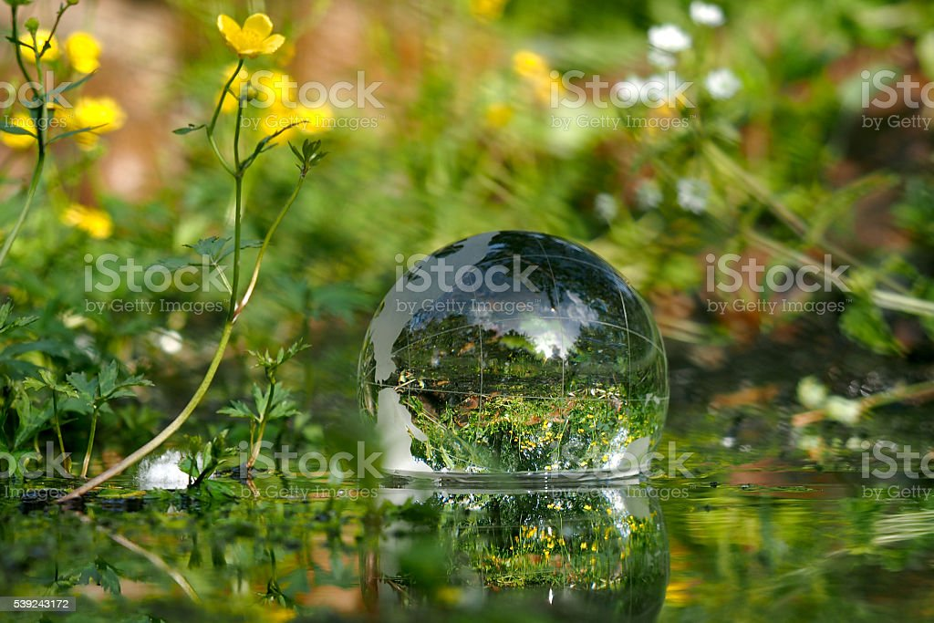 The ball in the water. Green water, forest flowers royalty-free stock photo