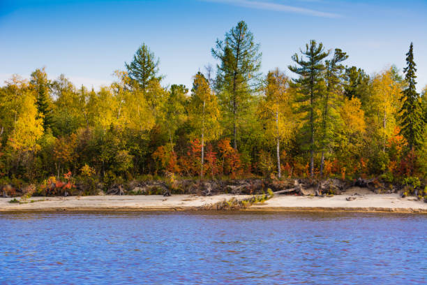 the bank of the river nadym. - swashbuckler stock photos and pictures