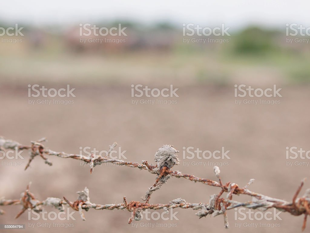 The barbed wire stock photo