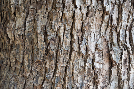 The Bark tree image close up in the wood