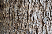 istock The Bark tree image close up in the wood 869270990