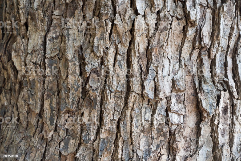 The Bark tree image close up in the wood stock photo