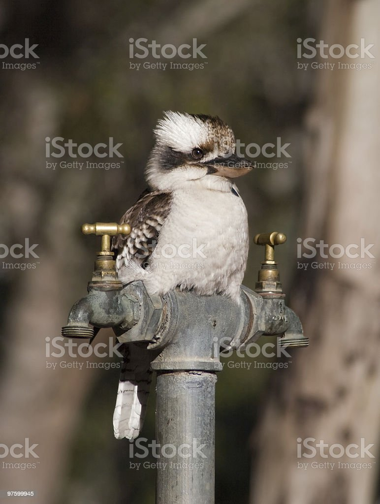 The Bartender royalty-free stock photo