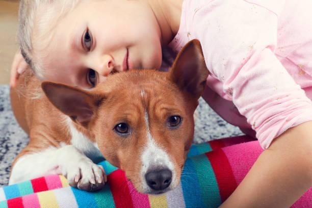 der basenji hund liegt auf dem mädchen auf die beine, die freundschaft des kindes und das tier. - hunde strumpfhosen stock-fotos und bilder