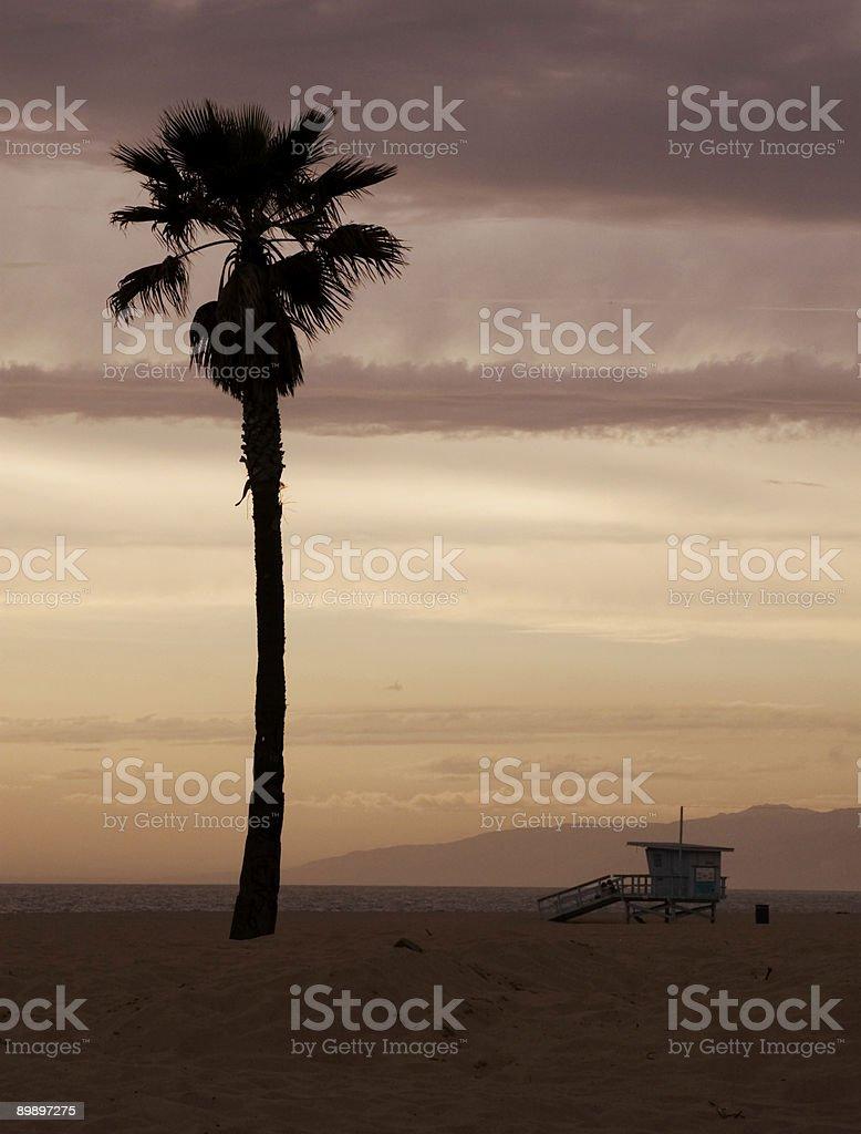 The beach at Venice royalty free stockfoto