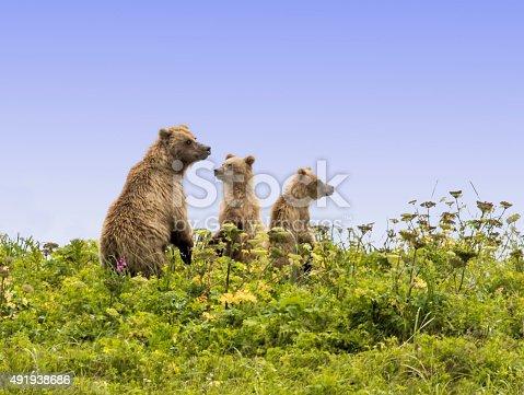 istock The Bear Skyline 491938686
